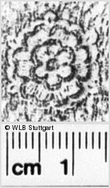 Image Description for https://www.wlb-stuttgart.de/kyriss/images/s0021002.jpg