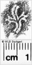 Image Description for https://www.wlb-stuttgart.de/kyriss/images/s0022327.jpg
