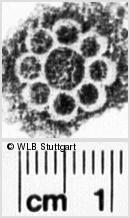 Image Description for https://www.wlb-stuttgart.de/kyriss/images/s0023803.jpg