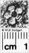 Image Description for https://www.wlb-stuttgart.de/kyriss/images/s0024304.jpg