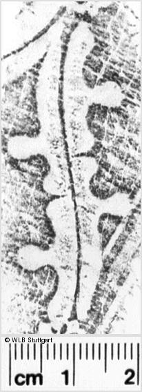 Image Description for https://www.wlb-stuttgart.de/kyriss/images/s0024928.jpg