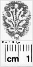 Image Description for https://www.wlb-stuttgart.de/kyriss/images/s0026114.jpg