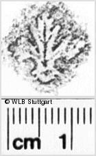 Image Description for https://www.wlb-stuttgart.de/kyriss/images/s0026210.jpg