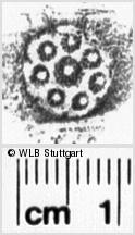 Image Description for https://www.wlb-stuttgart.de/kyriss/images/s0030413.jpg