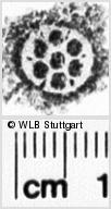 Image Description for https://www.wlb-stuttgart.de/kyriss/images/s0030723.jpg