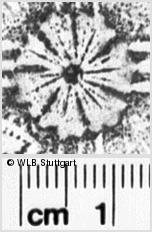 Image Description for https://www.wlb-stuttgart.de/kyriss/images/s0031417.jpg