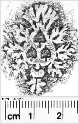 Image Description for https://www.wlb-stuttgart.de/kyriss/images/s0034202.jpg
