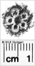 Image Description for https://www.wlb-stuttgart.de/kyriss/images/s0035328.jpg