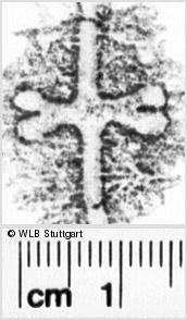 Image Description for https://www.wlb-stuttgart.de/kyriss/images/s0040804.jpg