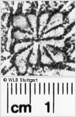 Image Description for https://www.wlb-stuttgart.de/kyriss/images/s0041520.jpg