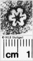 Image Description for https://www.wlb-stuttgart.de/kyriss/images/s0042124.jpg
