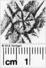 Image Description for https://www.wlb-stuttgart.de/kyriss/images/s0042324.jpg
