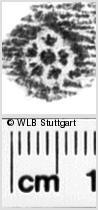 Image Description for https://www.wlb-stuttgart.de/kyriss/images/s0044412.jpg