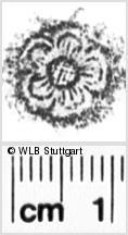 Image Description for https://www.wlb-stuttgart.de/kyriss/images/s0052213.jpg