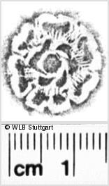 Image Description for https://www.wlb-stuttgart.de/kyriss/images/s0052945.jpg