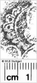 Image Description for https://www.wlb-stuttgart.de/kyriss/images/s0053906.jpg