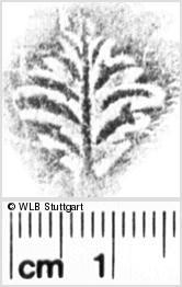 Image Description for https://www.wlb-stuttgart.de/kyriss/images/s0054427.jpg