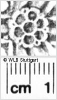 Image Description for https://www.wlb-stuttgart.de/kyriss/images/s0055005.jpg