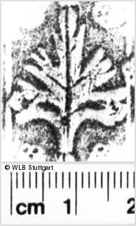 Image Description for https://www.wlb-stuttgart.de/kyriss/images/s0056125.jpg