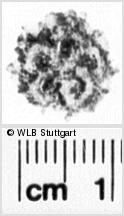 Image Description for https://www.wlb-stuttgart.de/kyriss/images/s0060607.jpg