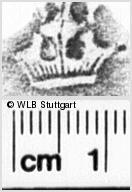 Image Description for https://www.wlb-stuttgart.de/kyriss/images/s0060708.jpg
