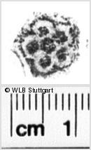 Image Description for https://www.wlb-stuttgart.de/kyriss/images/s0062910.jpg