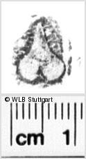 Image Description for https://www.wlb-stuttgart.de/kyriss/images/s0062912.jpg