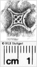 Image Description for https://www.wlb-stuttgart.de/kyriss/images/s0063506.jpg