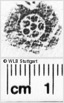 Image Description for https://www.wlb-stuttgart.de/kyriss/images/s0064208.jpg