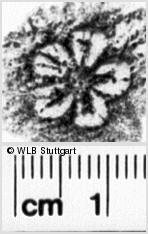 Image Description for https://www.wlb-stuttgart.de/kyriss/images/s0064723.jpg