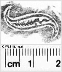 Image Description for https://www.wlb-stuttgart.de/kyriss/images/s0081001.jpg