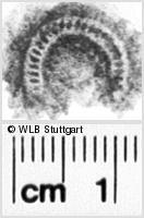 Image Description for https://www.wlb-stuttgart.de/kyriss/images/s0082010.jpg