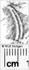 Image Description for https://www.wlb-stuttgart.de/kyriss/images/s0090306.jpg