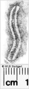 Image Description for https://www.wlb-stuttgart.de/kyriss/images/s0091706.jpg