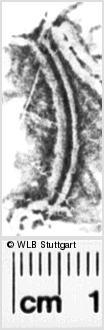 Image Description for https://www.wlb-stuttgart.de/kyriss/images/s0092010.jpg