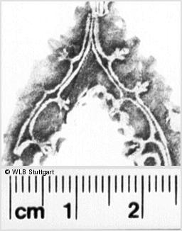 Image Description for https://www.wlb-stuttgart.de/kyriss/images/s0093428.jpg