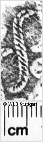 Image Description for https://www.wlb-stuttgart.de/kyriss/images/s0110712.jpg