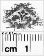 Image Description for https://www.wlb-stuttgart.de/kyriss/images/s0110725.jpg
