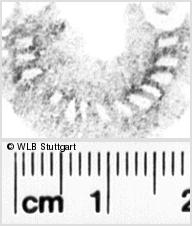 Image Description for https://www.wlb-stuttgart.de/kyriss/images/s0110813.jpg