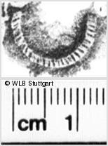Image Description for https://www.wlb-stuttgart.de/kyriss/images/s0111511.jpg