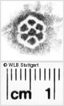 Image Description for https://www.wlb-stuttgart.de/kyriss/images/s0111905.jpg
