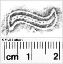 Image Description for https://www.wlb-stuttgart.de/kyriss/images/s0111906.jpg