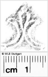 Image Description for https://www.wlb-stuttgart.de/kyriss/images/s0131713.jpg