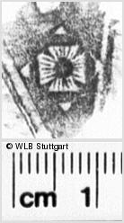 Image Description for https://www.wlb-stuttgart.de/kyriss/images/s0132219.jpg