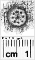 Image Description for https://www.wlb-stuttgart.de/kyriss/images/s0132606.jpg