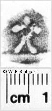 Image Description for https://www.wlb-stuttgart.de/kyriss/images/s0134405.jpg