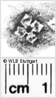 Image Description for https://www.wlb-stuttgart.de/kyriss/images/s0134913.jpg