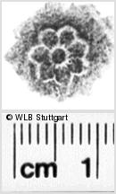 Image Description for https://www.wlb-stuttgart.de/kyriss/images/s0135111.jpg