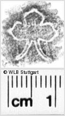 Image Description for https://www.wlb-stuttgart.de/kyriss/images/s0135114.jpg