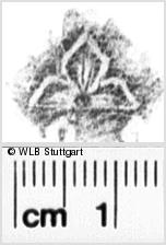 Image Description for https://www.wlb-stuttgart.de/kyriss/images/s0136310.jpg